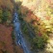 裏磐梯の紅葉もピークになりました。