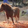 フットパスで出会った馬と犬