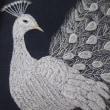 白い孔雀できた👀!!