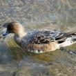 水鳥のいる川