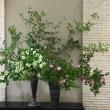 デパートの玄関の花