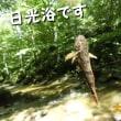小さな川でカワカジカが日光浴?!?
