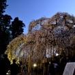 【いわきの桜の名所へ行くの巻】