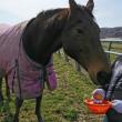 待ちわびた春を楽しむ馬達 part 1