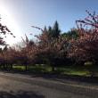 春がやっときましたね。