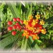 菜園のハッカチョウと花