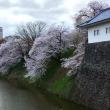 山形の桜が見頃に! 桜が一気に開花する。