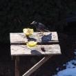 餌場に来る鳥たち