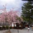 身曽岐(みそぎ)神社と桜~北杜市
