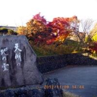 カエデびいきの紅葉散見