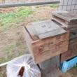 ミツバチ箱、解体
