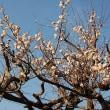 わが家の春(必須)