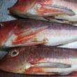 #魚 #ほうぼう #ししっぽう #煮魚
