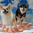 スタッフのオススメ暑さ対策グッズ(*^-^*)  犬のしつけ教室@アロハドギー