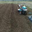 ジャガイモの畝作り