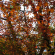 裏山解禁~秋のドッグトレイル~