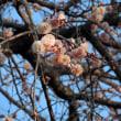梅の花づくし
