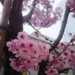 桜  西行、桜寿司
