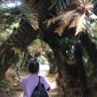 1月23日徳之島から奄美