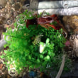 ◆草取り&水槽掃除。