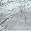 またも寒波襲来で雪降り続く・・・