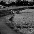 kyoto kitasaga