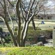 2018-03-17 今日の記録 善福寺緑地 散策