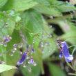 秋雨と花たち*