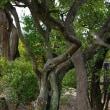 岡山県倉敷市児島通生 通仙園(瀬戸内海国立公園)