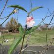 狂い咲き - 貴重な経験