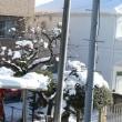 今朝家から出ずに撮った雪の様子