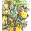 神田川のレモン