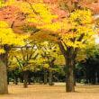 代々木公園の美、