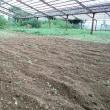 2017年9月17日 今日は台風で畑は休みです。