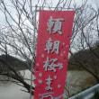 頼朝桜まつり(千葉・鋸南町)