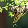 蝶も恋の季節?
