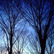 夕暮れ 木々のある風景
