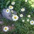 ここのお庭の主は、やさしいおばあちゃんなんです。