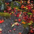 彩り落ち葉。