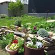 庭つながり