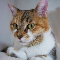 イカす師走の飼い猫2匹