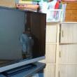 テレビを納品