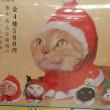 ねこクリスマス??