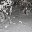 雪は降り続き・・・