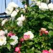 花と園芸用品のお店