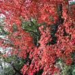 晩秋の鎌倉