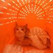 飼い主のいない猫さんの避妊手術4匹済み