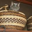 猫の梅ちゃん