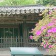 鎌倉大仏の裏側