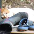 長靴をはきたい猫
